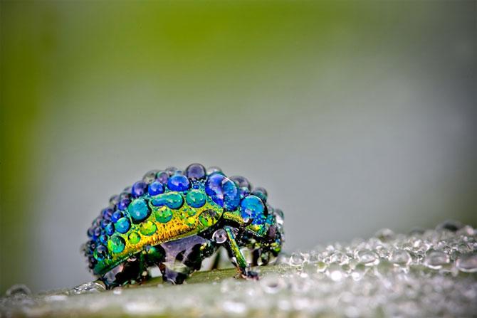 Fotografii insecte David Chambon