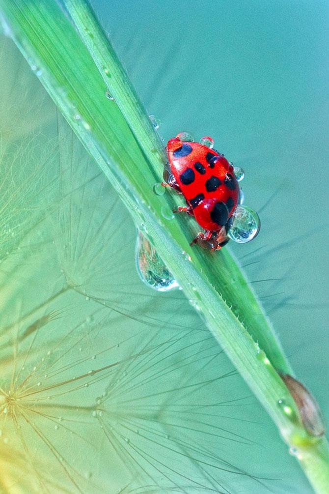 Fotografii insecte Wil Mijer