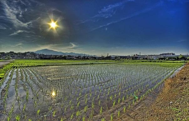 Japonia intre intelepciune si arta - Poza 5