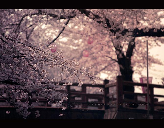 25 de flori din Japonia - Poza 2