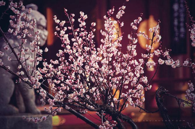 25 de flori din Japonia - Poza 3