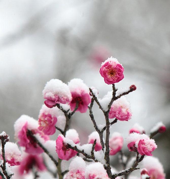 25 de flori din Japonia - Poza 4