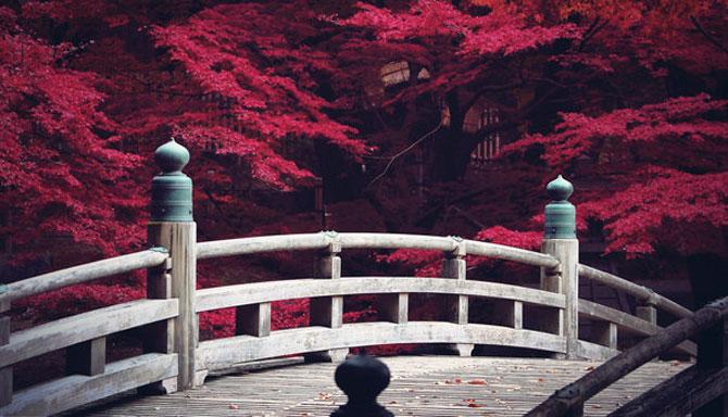 25 de flori din Japonia - Poza 5