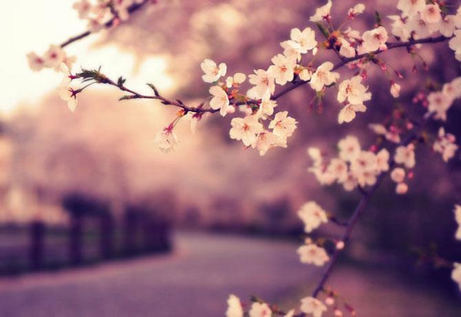 25 de flori din Japonia - Poza 7
