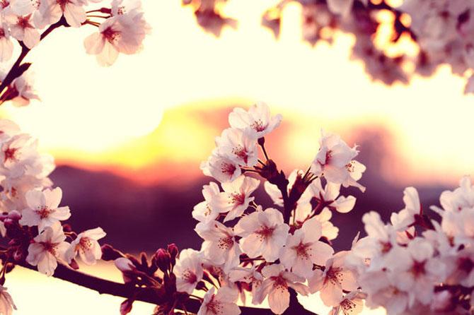 25 de flori din Japonia - Poza 9