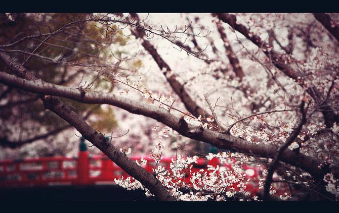 25 de flori din Japonia - Poza 11