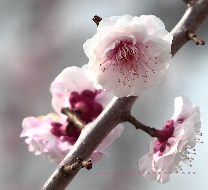 25 de flori din Japonia - Poza 16