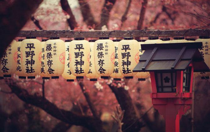 25 de flori din Japonia - Poza 19