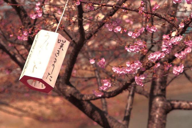 25 de flori din Japonia - Poza 20