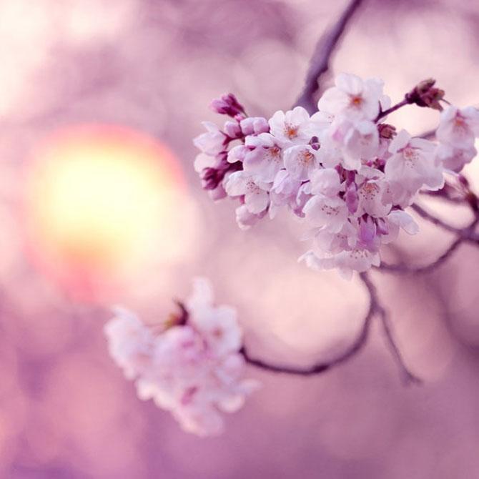 25 de flori din Japonia - Poza 21