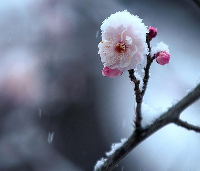 25 de flori din Japonia - Poza 22