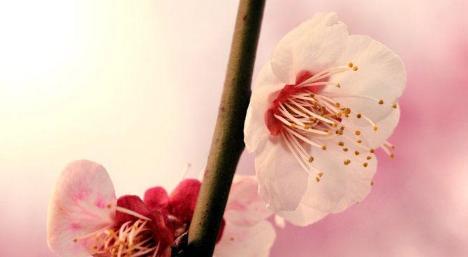 25 de flori din Japonia - Poza 23
