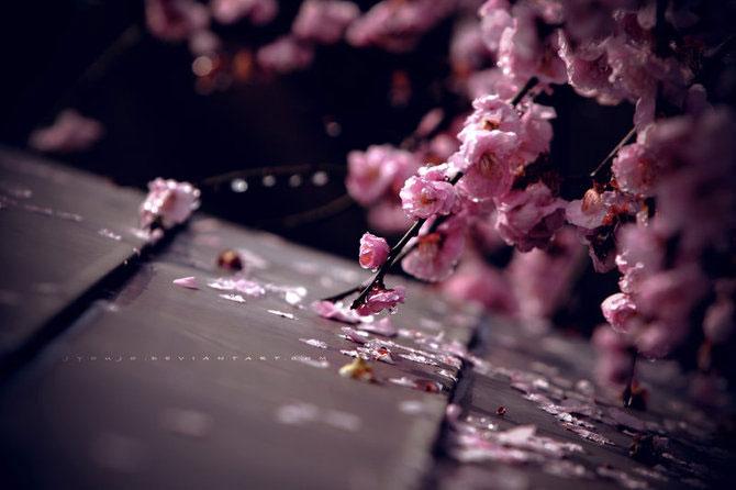 25 de flori din Japonia - Poza 24
