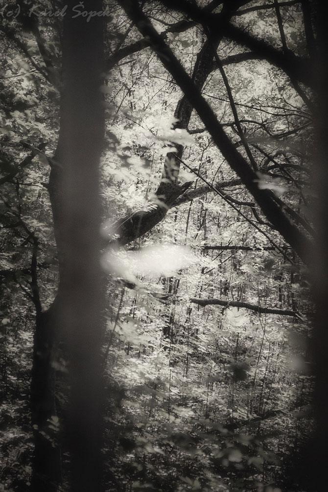 Povesti din paduri parasite, de Kaja Sopek - Poza 3