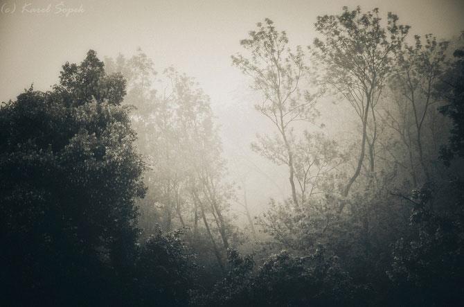 Povesti din paduri parasite, de Kaja Sopek - Poza 9