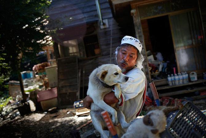 A salvat 500 de animale din ruinele de la Fukushima - Poza 1