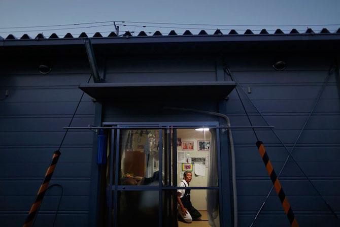 A salvat 500 de animale din ruinele de la Fukushima - Poza 4