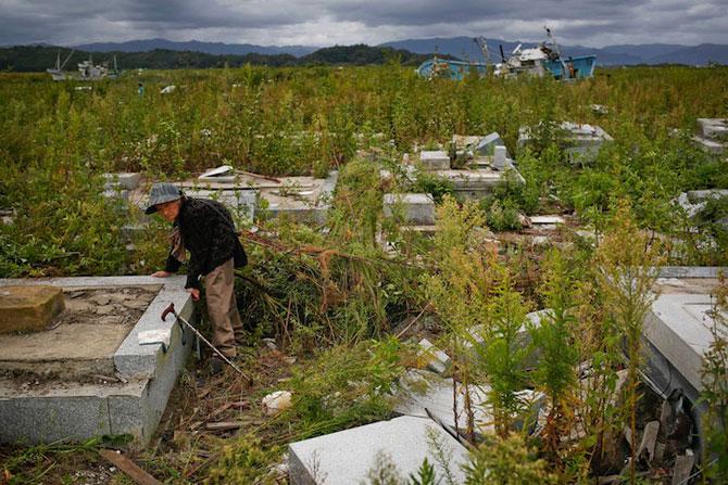 A salvat 500 de animale din ruinele de la Fukushima - Poza 8