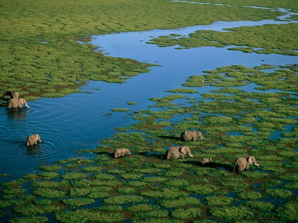 Taramuri mirifice: Kenya - Poza 11