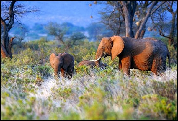 Taramuri mirifice: Kenya - Poza 12