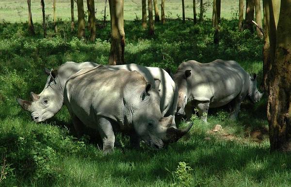 Taramuri mirifice: Kenya - Poza 14