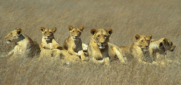 Taramuri mirifice: Kenya - Poza 16