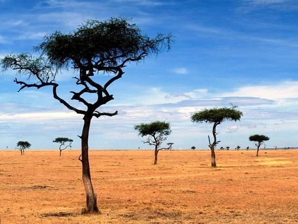 Taramuri mirifice: Kenya - Poza 17