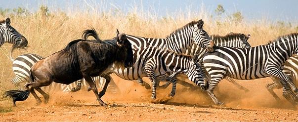 Taramuri mirifice: Kenya - Poza 19