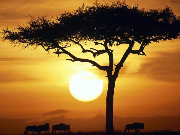 Taramuri mirifice: Kenya - Poza 3