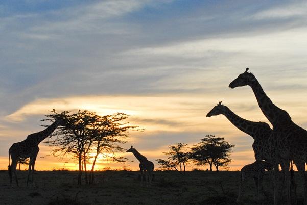 Taramuri mirifice: Kenya - Poza 5