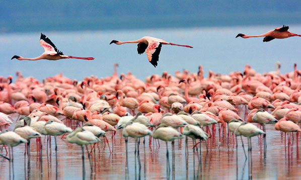 Taramuri mirifice: Kenya - Poza 9