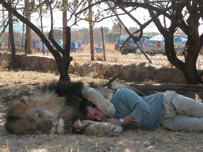 Kevin Richardson, imblanzitorul de lei - Poza 11