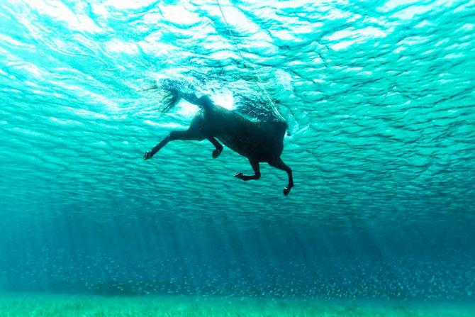 Dans subacvatic, surprins de Kurt Arrigo - Poza 5