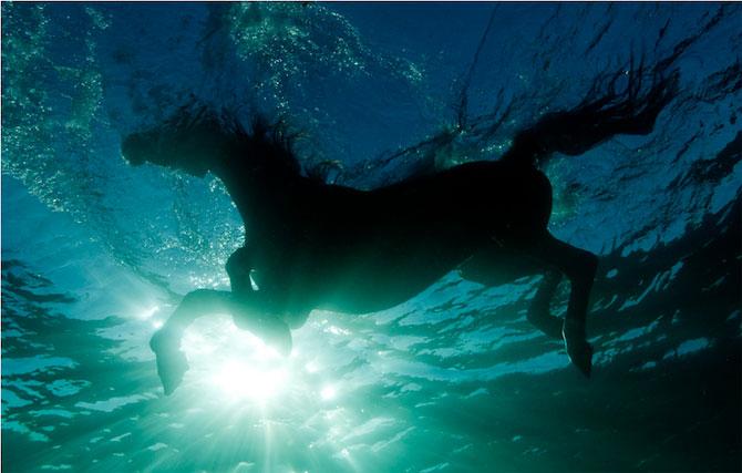 Dans subacvatic, surprins de Kurt Arrigo - Poza 7