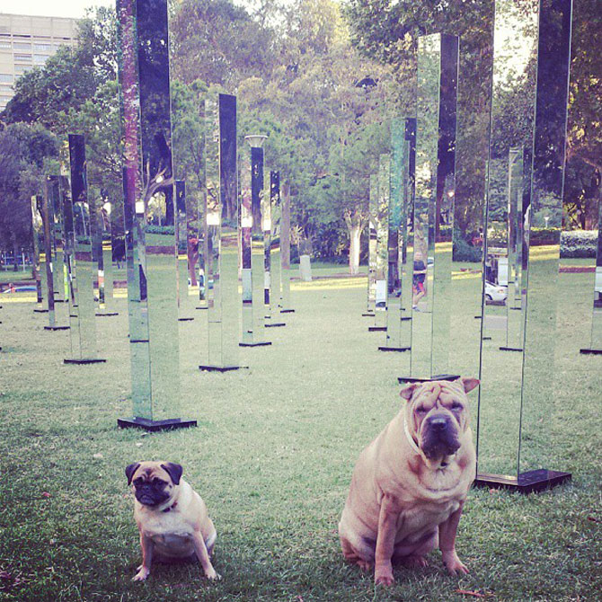 Labirint de oglinzi la Sydney - Poza 5