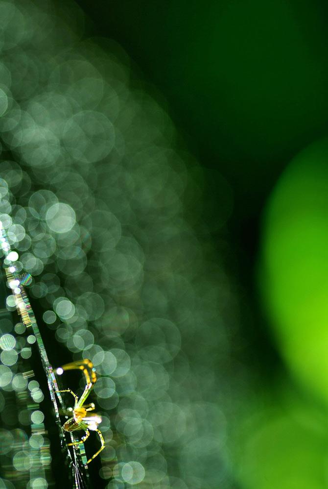 Fotografii macro panze de paianjen Lafugue Logos