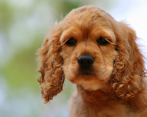 Atentie: Animale simpatice in 45 de poze! - Poza 24