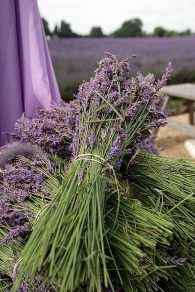 Culturile de levantica din Anglia - Poza 9