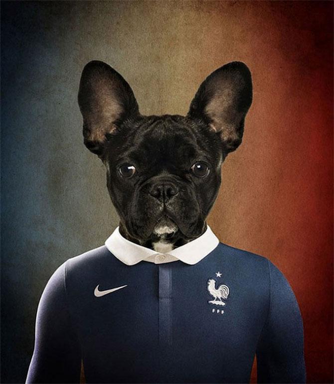 Cainii tarilor de la Cupa Mondiala de Fotbal 2014 - Poza 2