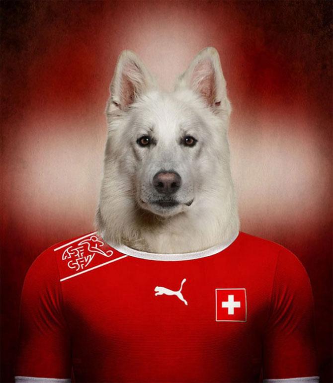 Cainii tarilor de la Cupa Mondiala de Fotbal 2014 - Poza 3