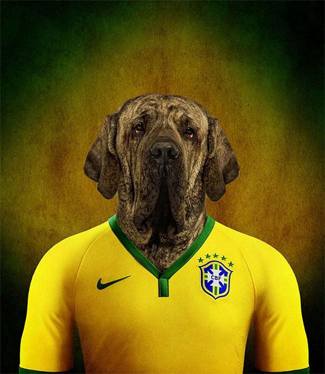 Cainii tarilor de la Cupa Mondiala de Fotbal 2014 - Poza 6