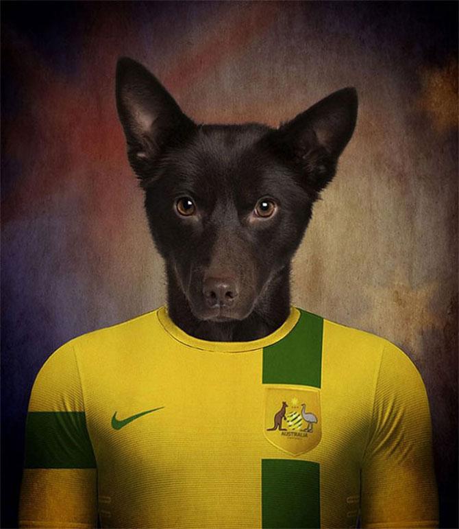 Cainii tarilor de la Cupa Mondiala de Fotbal 2014 - Poza 7