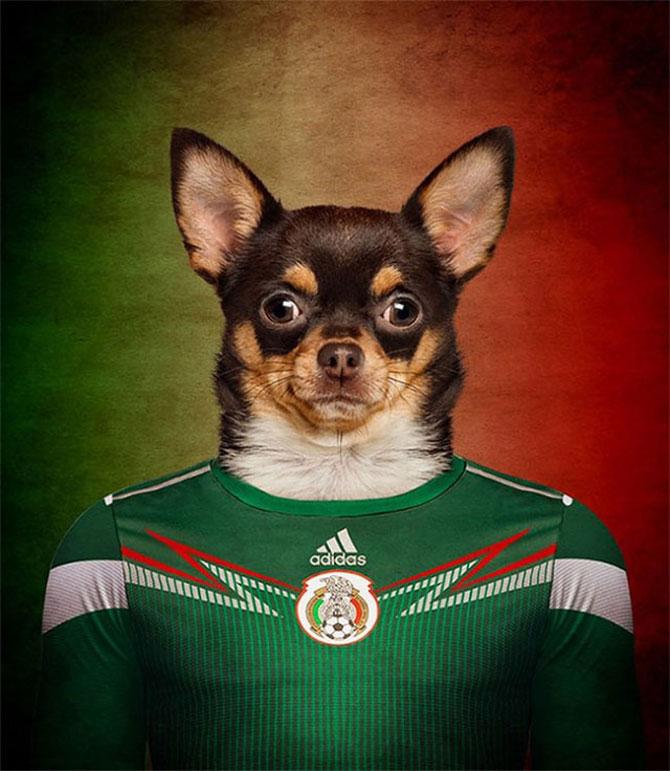 Cainii tarilor de la Cupa Mondiala de Fotbal 2014 - Poza 8