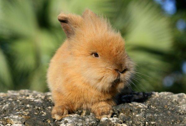 Atentie: Animale simpatice in 45 de poze! - Poza 25