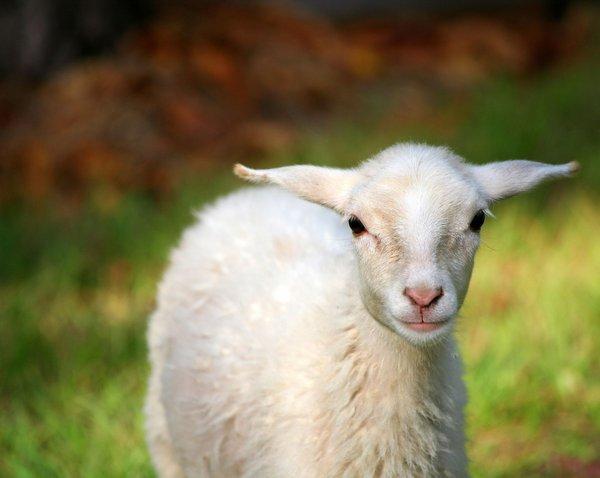 Atentie: Animale simpatice in 45 de poze! - Poza 27