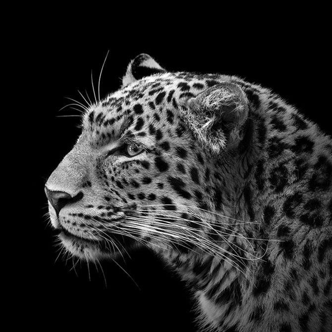 Portrete impresionante de animale, de Lukas Holas - Poza 1
