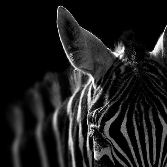 Portrete impresionante de animale, de Lukas Holas - Poza 2
