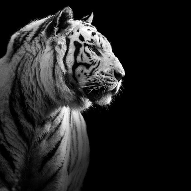 Portrete impresionante de animale, de Lukas Holas - Poza 3