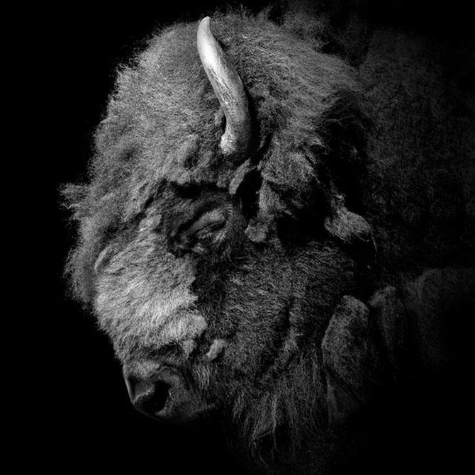 Portrete impresionante de animale, de Lukas Holas - Poza 4