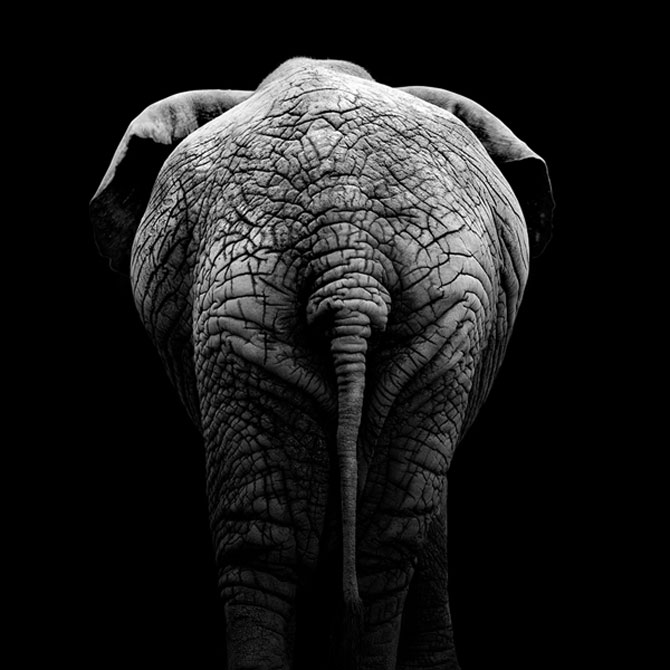 Portrete impresionante de animale, de Lukas Holas - Poza 5